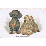 Impressive Postcard with Sausage Dog and Terrier