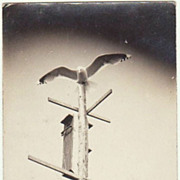 Unusual Photo Postcard. Falcon on Birdhouses.