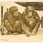 1934: Nuremberg Zoo: Photo Postcard 2 Chimpanzees