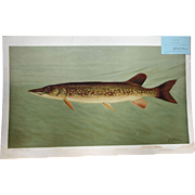 """1890's Chromolithograph Print of """"The Pike"""" by William C. Harris"""