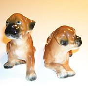 Pair of Glazed Boxer Puppies