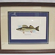 Framed Print of Walleye  in Color 50% Off