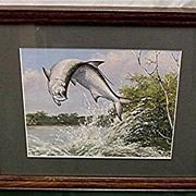 Jumping Tarpon Maynard Reece Framed Print in Color 50% Off