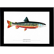 SALE Print Quebec Red Trout