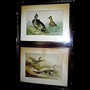 SALE Prints:Pair of Chronographs, Alexander Pope Junior, sports:game-hunting, all original, ..