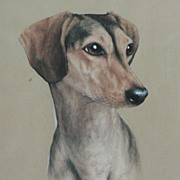 Saluki dog painting...Saluki dog....