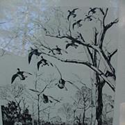Mississippi Mallards , Etching by Richard C. Ellis, Wildlife Artist