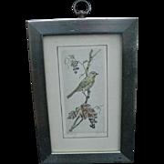 Striking Vintage Etching of Bird on Grape Vine