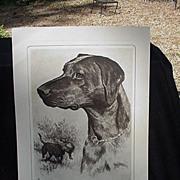 SALE R.H. Palenske Dog Etching, Black Labrador
