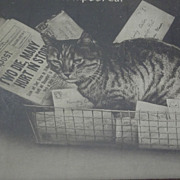 SALE Picture of Hindy the Boston Post Cat