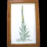 ORIGINAL Tempera BOTANICAL Floral Plant Painting by Portland Artist Sally Haley