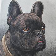 Herbert Thomas Dicksee 1862 – 1942 Etching of a Dog French Bulldog  'Shaver'