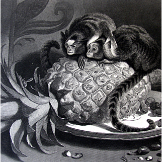 Antique Steel Engraving Landseer of Miniature Monkeys - Marmosets Victorian & Pineapple Fruit