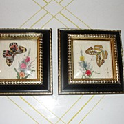 Butterflies and Dried Flower Shadowbox Pictures. - b22