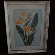 SOLD Botanical art still life study watercolor painting of tropical bird of paradise flowers