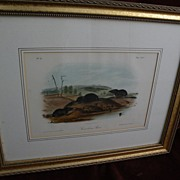 Original JOHN J. AUDUBON 19th century vintage lithograph print quadrupeds series in octavo siz