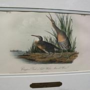 """JOHN J. AUDUBON hand colored 19th century lithograph print """"Clapper Rail or Salt Water Ma"""