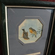 JOHN GOULD (1804-1881)  hand colored lithograph print of Asian birds by noted ornithologist ar