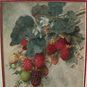 Circa 1900 American art PAIR signed still life watercolors of raspberries and cherries
