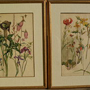 Original botanical art PAIR watercolor paintings of flowers dating to 1907