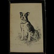 SOLD MORGAN DENNIS (1892-1960) original charcoal drawing of Boston Terrier by artist illustrat
