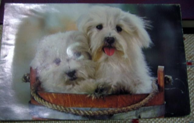 Puppy Squeak Postcard Printed in Japan