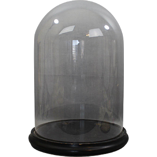 REDUCED Victorian Era Glass Display Dome with Walnut Footed Base Large Size