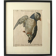 """Storia Naturale degli Uccelli"" 18th Century Manetti Hand Painted Bird Print"