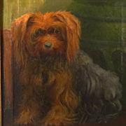 Antique Yorkshire Terrier Dog Oil Portrait