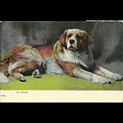 Vintage Postcard of Saint Bernard - On Guard - Early 1900's