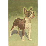 Alfred Mainzer Vintage Postcard of Boston Terrier - Artist Signed D. Carr