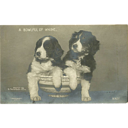 Rotograph 1906 Undivided Real Photo Postcard of Two Puppies - Bowlful of Whine