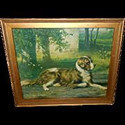 R. Atkinson Fox Pseudonym Musson Vintage Print of Saint Bernard Dog