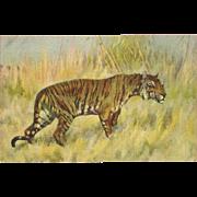 Stehli Freres Vintage Postcard of Alert Tiger