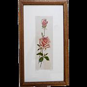 SOLD c.1940's Framed Original Hand Colored Etching – Pink Rose