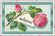 Melonrose