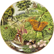 COALPORT Plate 'Insects' By Richard Lewington 1987