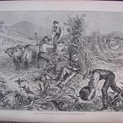 'AMERICAN HUSBANDRY: Gathering Pumpkins And Husking Maize' - Illustrated London News Sept. 24