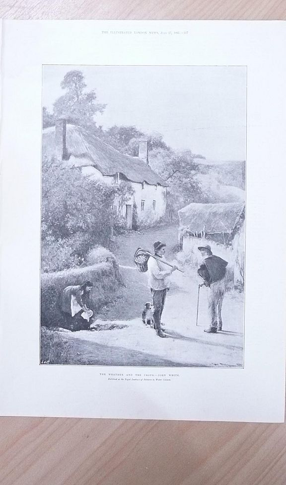 "Full Page Illustrated London News  1895 ""The Weather & The Crops"""