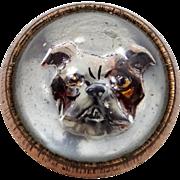 Cute Victorian Essex Glass Bulldog Button