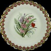 ROYAL WORCESTER c1869 Australian wild flowers antique plate #4