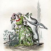 SALE Grandville Victorian Engraving 'Aubepine' 1847 from Les Fleurs Animees.