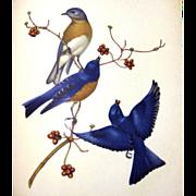 Menabonis Birds Vintage Bird Naturalist Book / Vintage Art Book / Gift Book / Nature Book / ..