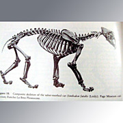 Ranco La Brea -- A Record of Pleistocene Life In California