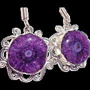 SOLD Rare Striking Purple Druzy Solar Quartz Earrings