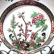 "Beautiful Coalport Indian Tree or Tree of Life Multicolor 8 ¾"" Dinner Plate"