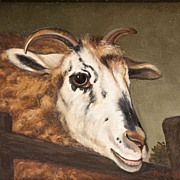 SALE Oil On Canvas of Ram by Amos Shontz