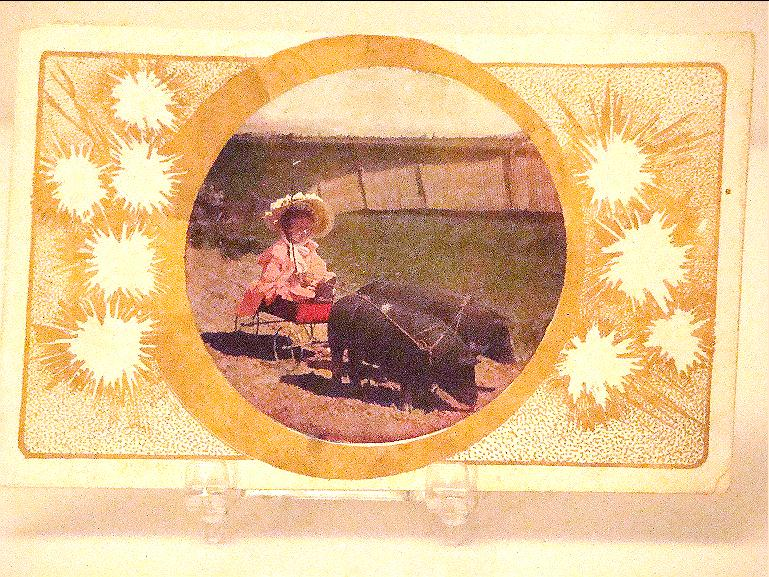 Fantastic 1909 Pigs Hogs pulling Cart With Little Girl Postcard