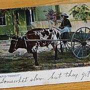 Vintage 1905 Black Americana  Postcard Rapid Transit