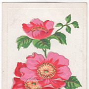Greetings Vintage Postcard Best Wishes Old Fashioned Pink Roses